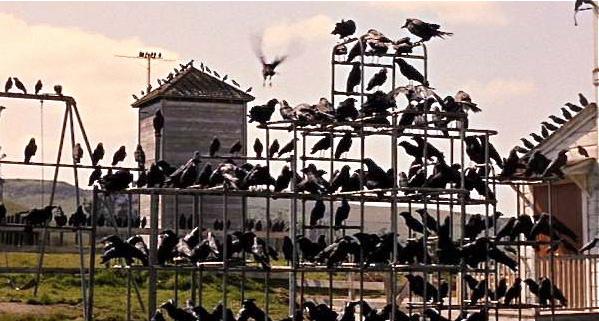 birdsgymnasium
