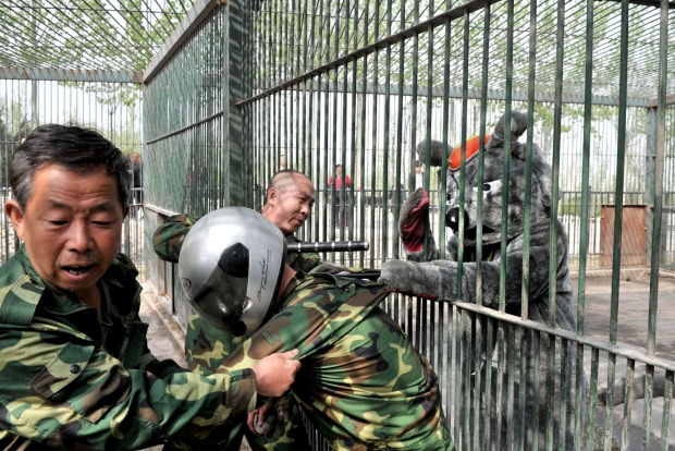 Staff take part in a preventive exercise against animal escape in order to enhance its capability of emergency handling at a zoo in Taiyuan