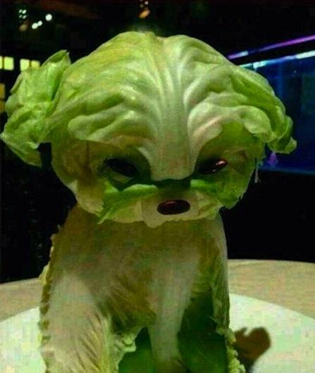 lettuce hound