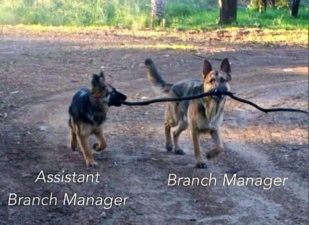 branch-manager-dog