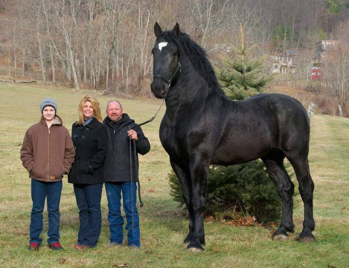 %22Moose%22 Percheron Champion