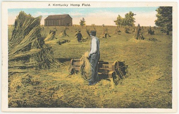 Kentucky Hemp Field