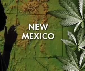NM weed