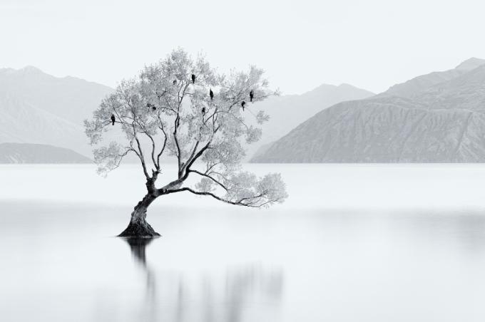 Bird Tree, Jordan Ek
