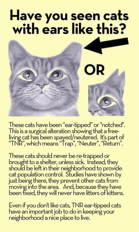 TNR feral cats