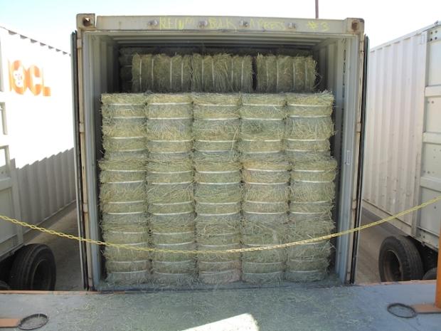 alfalfa bales bound for Asia