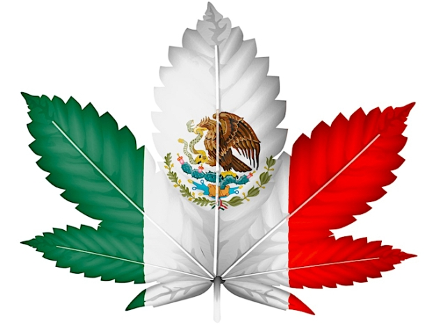 Mexican cannabis