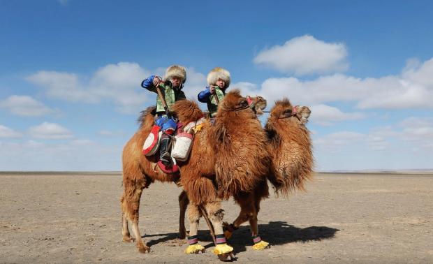 Mongolia camels fiesta